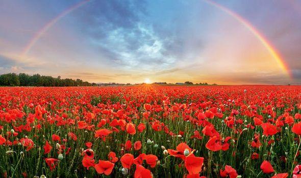 remembrance rainbow